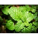 Longfill Aroma Geschmacksrichtung